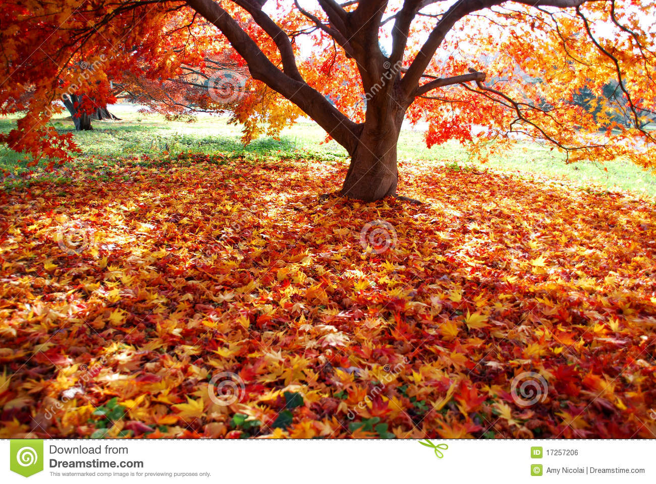Falling Leaves Wallpaper Free Download Colorful Carpet Of Fallen Leaves Royalty Free Stock Image