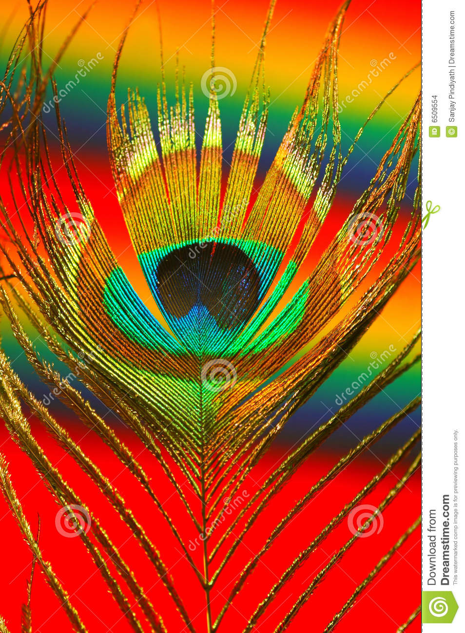 Rainbow 3d Wallpaper Colorful Peacock Feather Stock Images Image 6509554