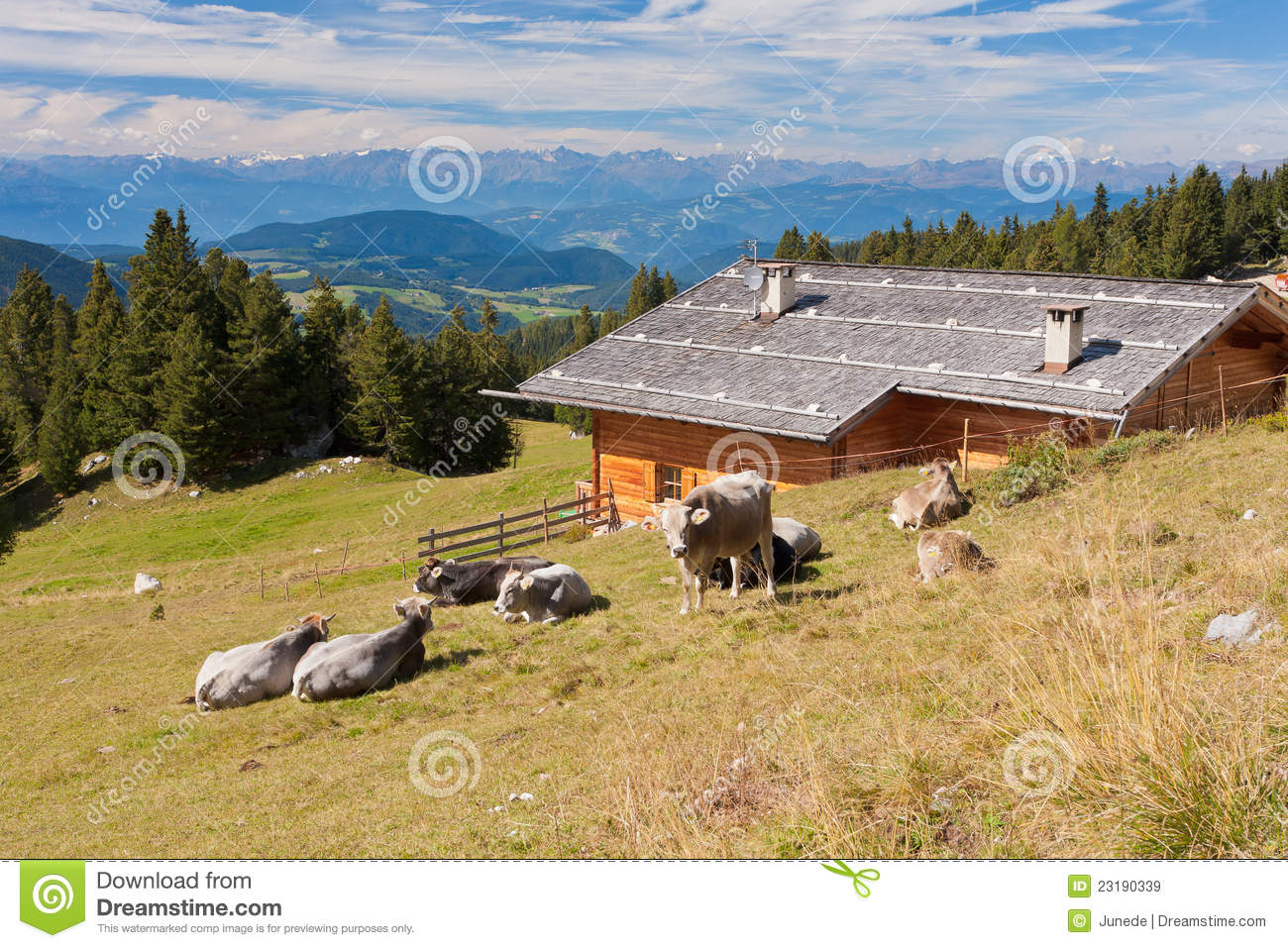 Mr Lodge Berlin Cows On A Meadow Royalty Free Stock Images Image 23190339