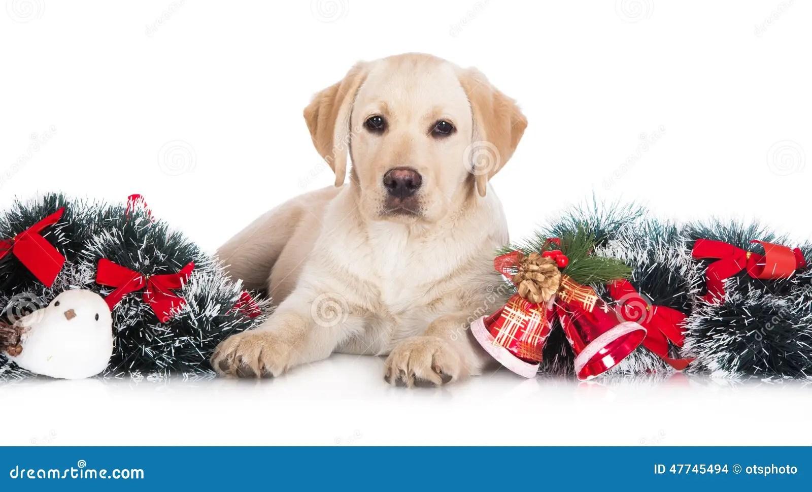 Wallpaper Perritos 3d Cucciolo Giallo Di Labrador Con Le Decorazioni Di Natale