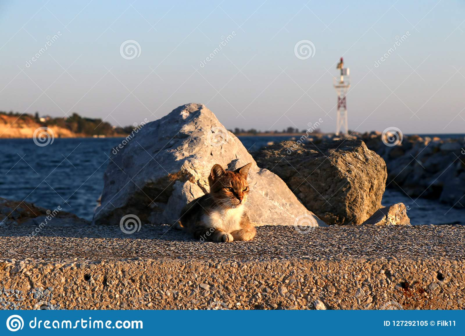 Lighthouse Background Cute Cat Sitting On The Harbor Rocks And Lighthouse Background