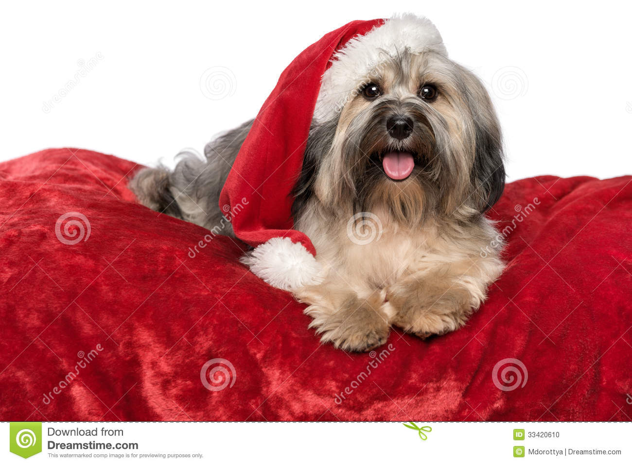 Cute Dog Puppy Background Wallpaper Pictures Cute Christmas Dog With A Santa Hat Is Lying On A Red