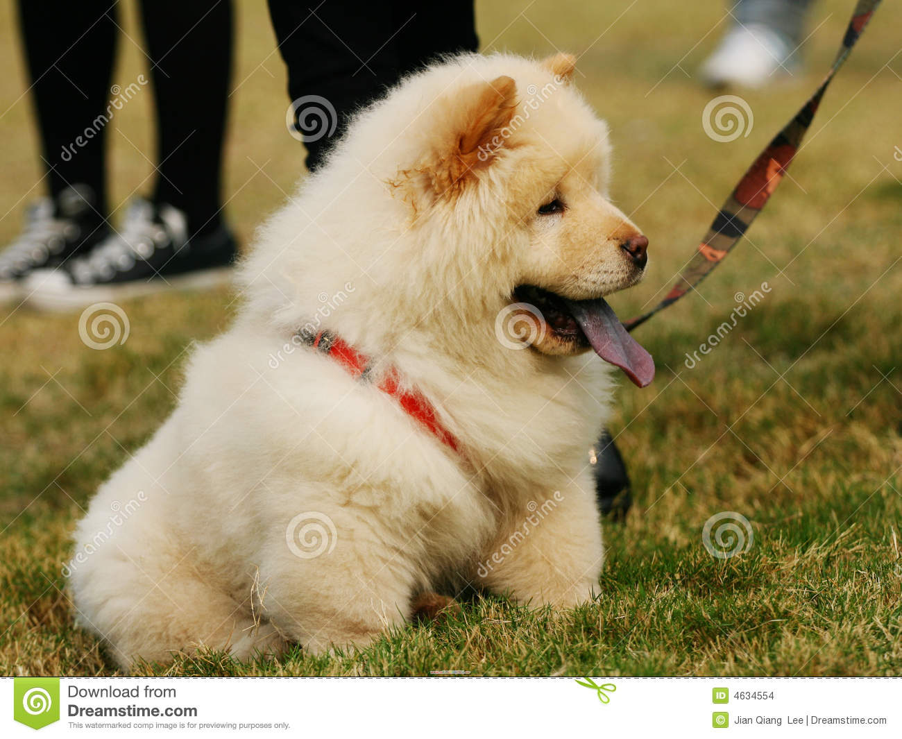 Cute Baby Puppy Pictures Wallpaper Cute Dog Chow Stock Photo Image Of Puppy Clever Sweet