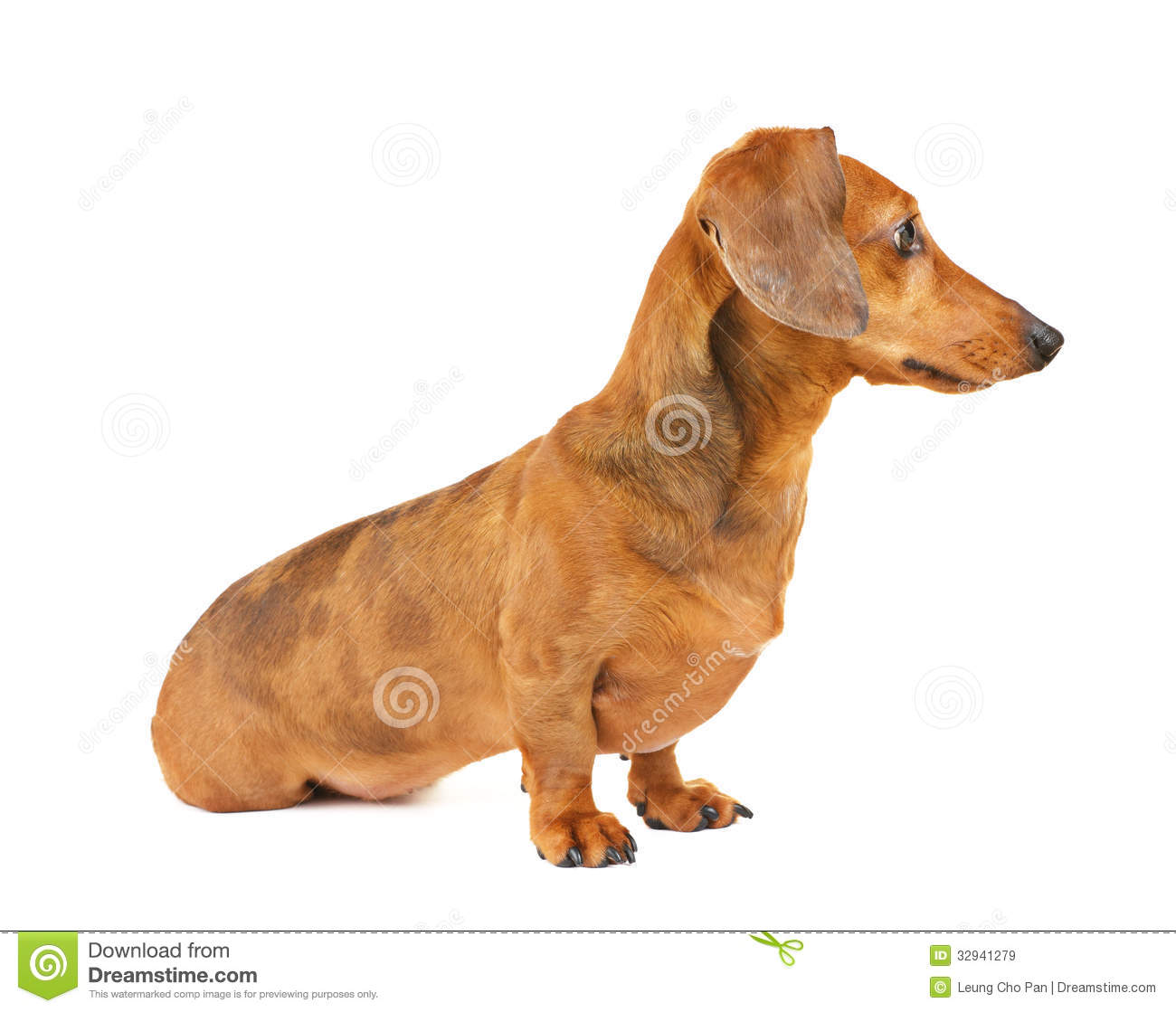 Bettwäsche Dog Side My Side Dachshund Dog Side View Royalty Free Stock Images Image
