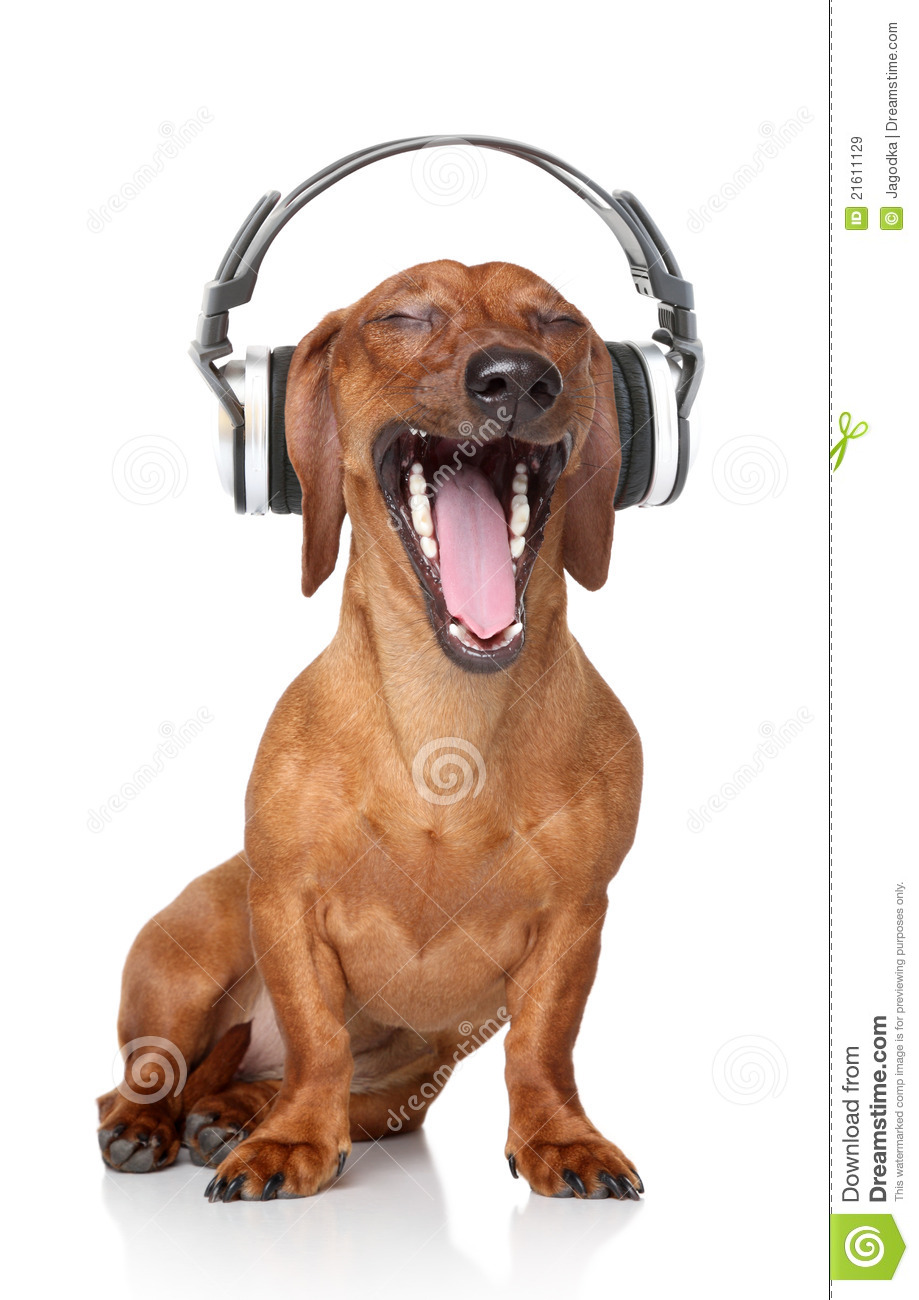 Cute Dachshund Wallpaper Dachshund Listen Music Royalty Free Stock Images Image