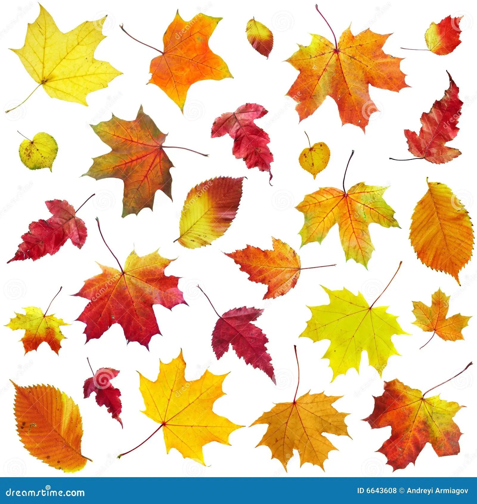 Tree With Leaves Falling Wallpaper De Bladeren Van De Herfst Op Een Witte Achtergrond Stock