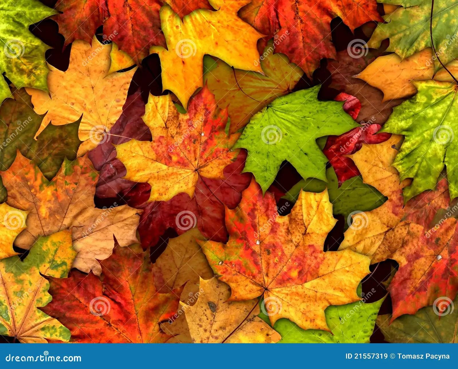 Iphone X Wallpaper Stock Hd De Droge Achtergrond Van De Herfstbladeren Stock