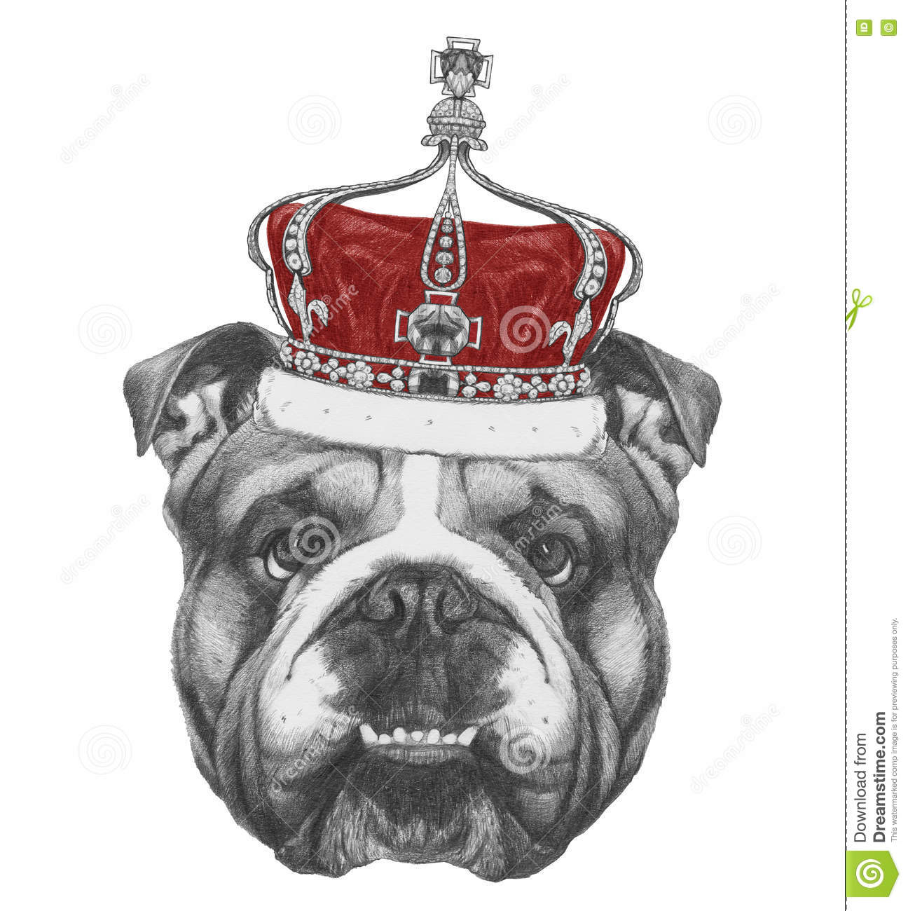 Bouledogue Decoration Design Dessin Original De Bouledogue Anglais Avec La Couronne
