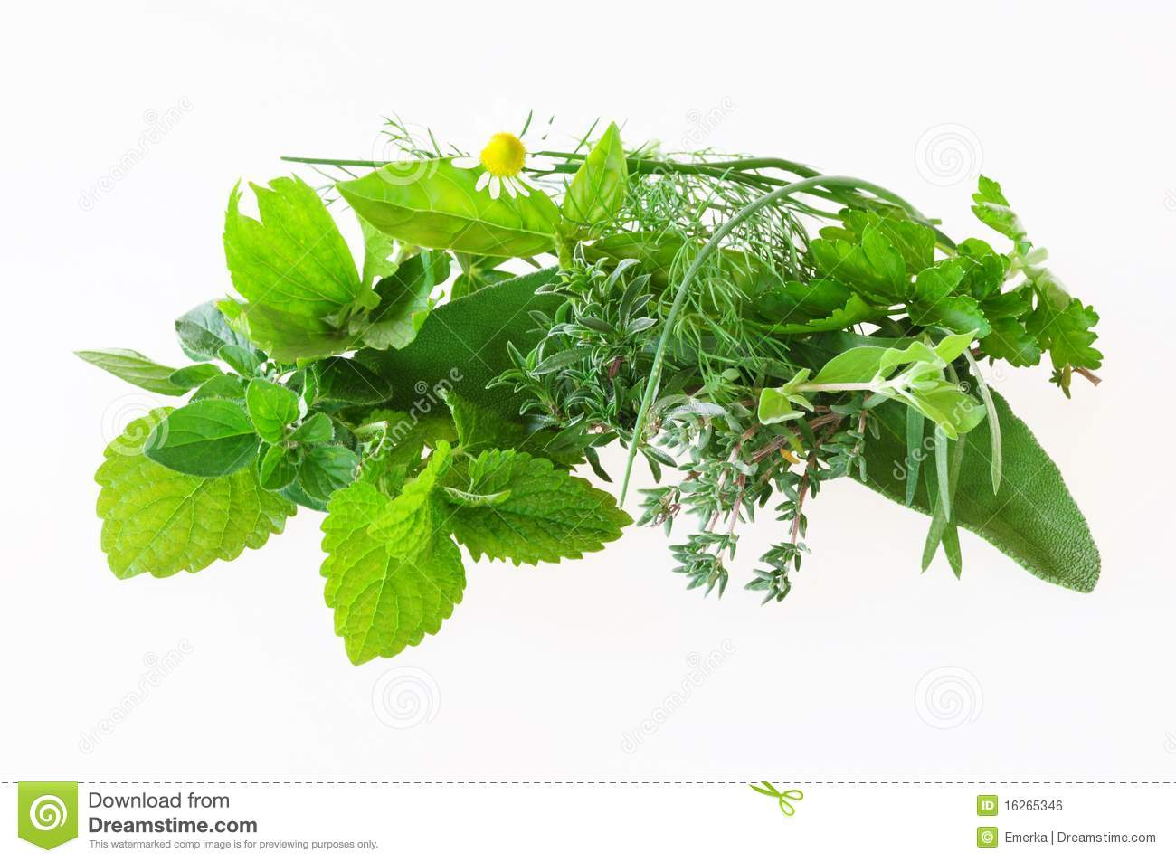Different herbs royalty free stock image image 16265346 16265346 different herbs royalty free stock image