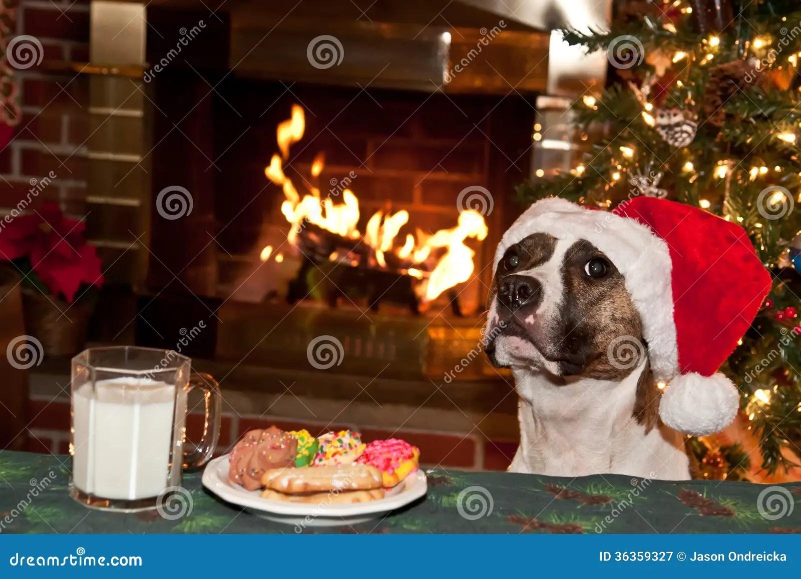 Dog Eats Santas Cookies Stock Image Image Of Bull