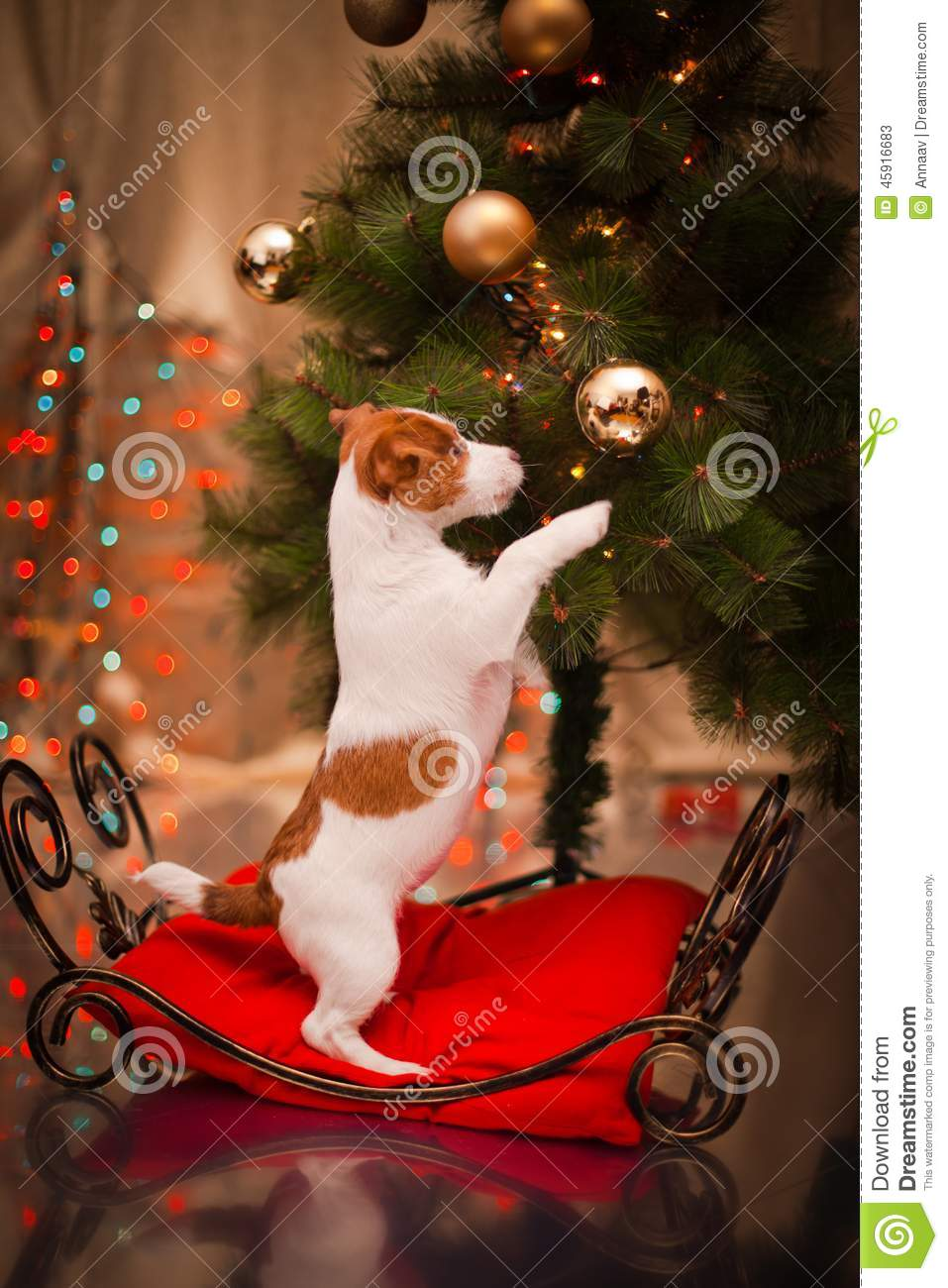 Xmas Cute Wallpaper Dog Jack Russell Terrier Puppy Christmas Stock Image