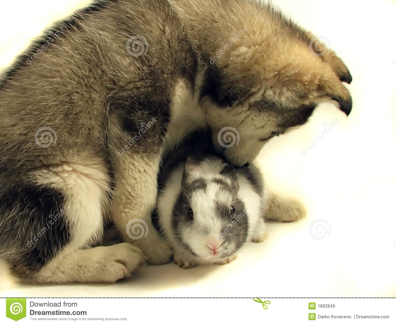 Cute White Dogs Wallpapers Dog And Rabbit Royalty Free Stock Images Image 1892849