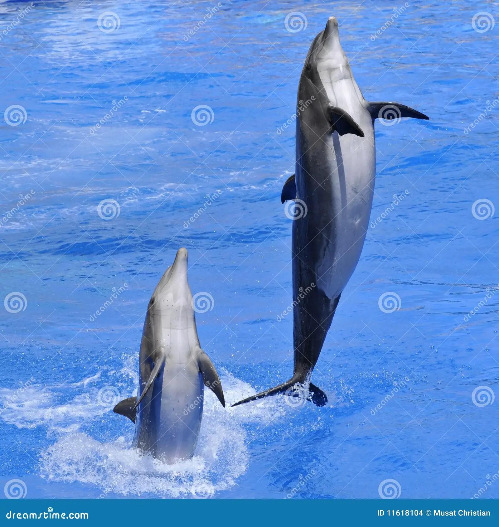 Baby Live Wallpaper Hd Dolfijnen Die Uit Water Springen Stock Foto Afbeelding