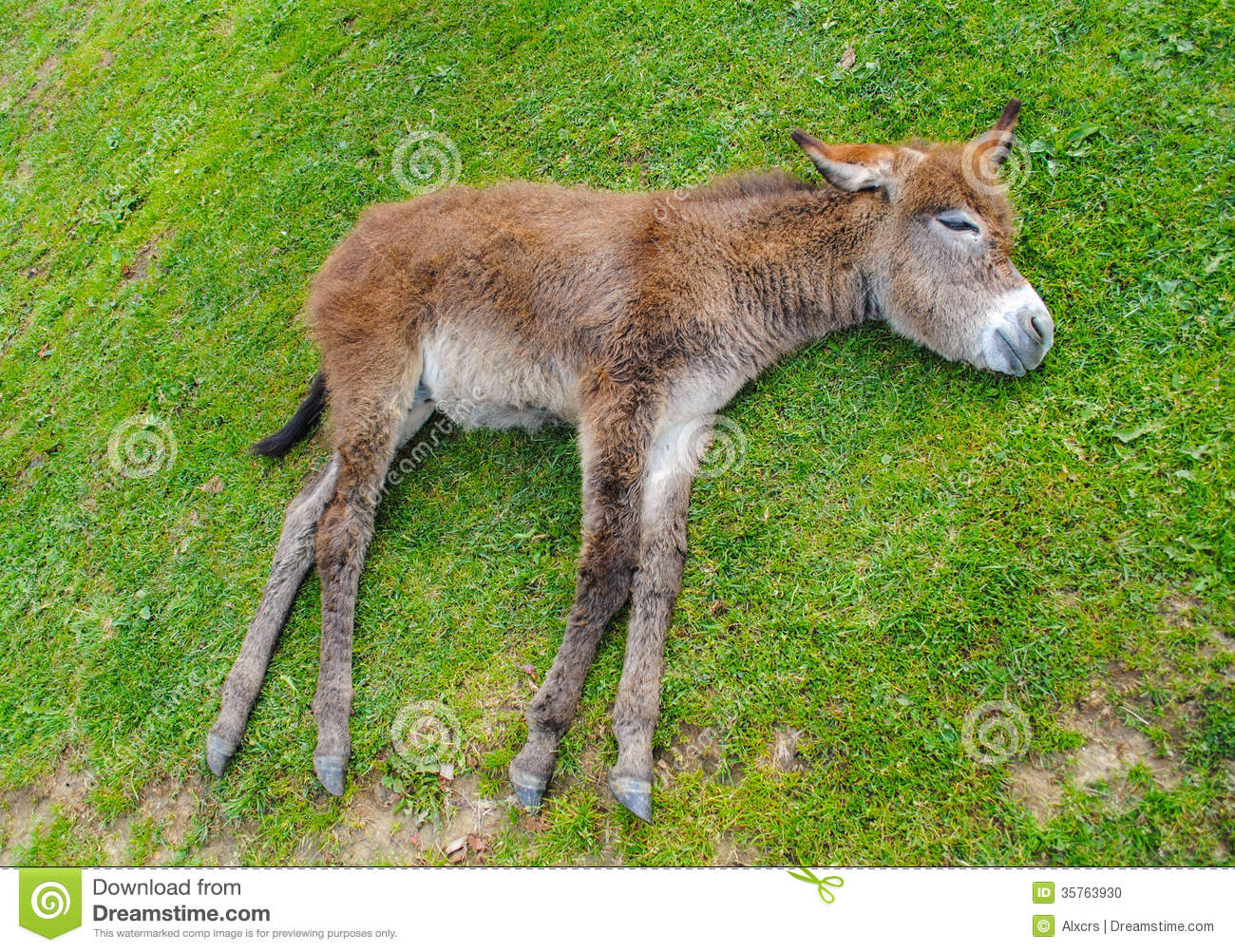 Cute Animal Wallpapers Free Download Donkey Stock Photo Image 35763930