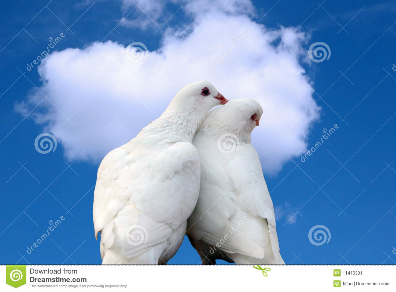 Cute Valentine Pc Wallpaper Doves In Love Stock Image Image 11410391