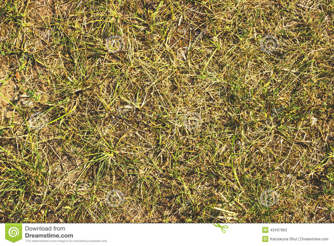 Free Fall Harvest Wallpaper Dry Grass Hay Straw Textured Border Background Stock