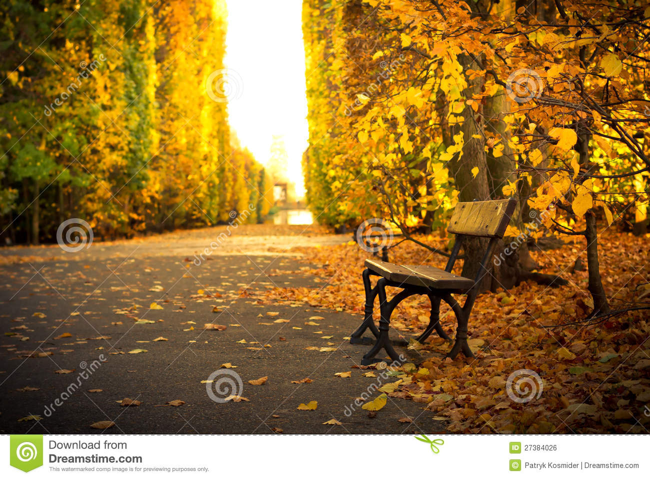 Fresh New Fall Hd Wallpapers Empty Bench In Beautiful Yellow Park Scenery Stock Photo