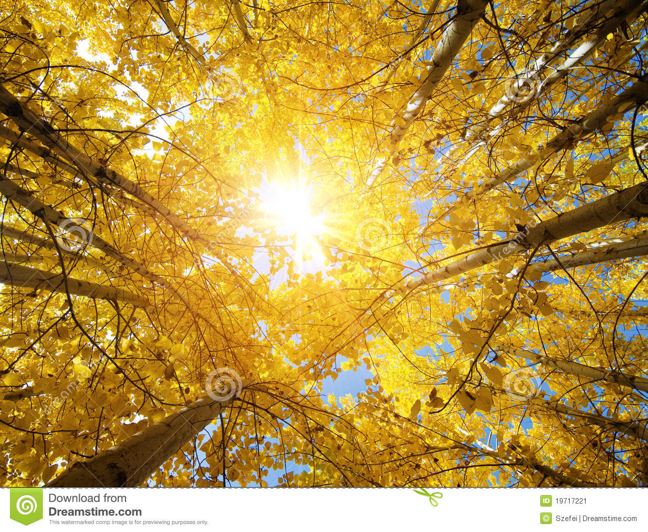Abstract Fall Colors Wallpaper Fall Aspen Trees Stock Image Image Of Daylight Leaf