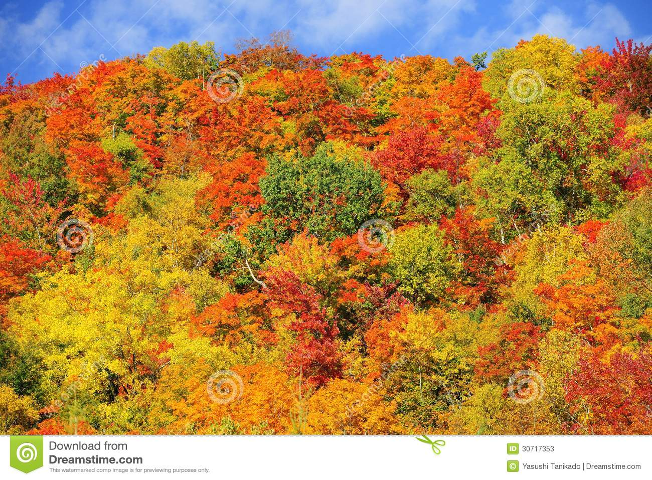 Fall Colors Wallpaper New England Fall Color Forest Stock Photos Image 30717353