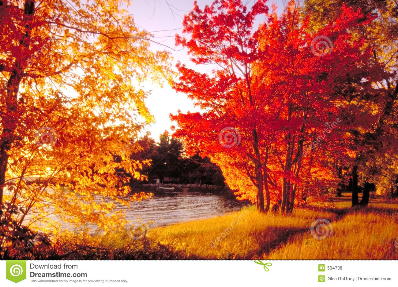 Fall Heart Leaves Background Wallpaper Fall Colours North Bay Stock Photo Image Of Canada