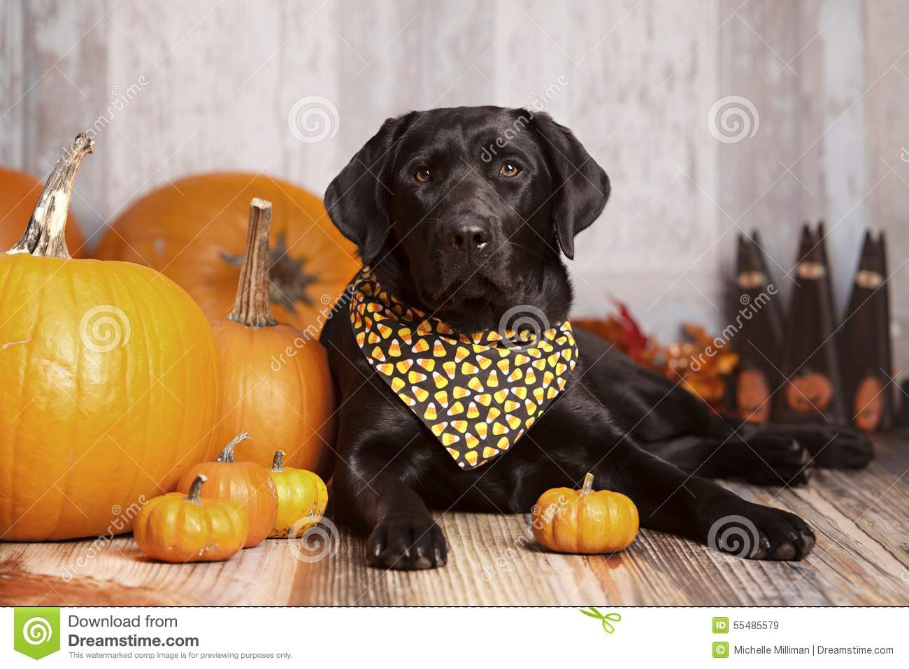 Puppies In Fall Wallpaper Fall Dog Portrait Stock Image Image Of Seeing Decoration