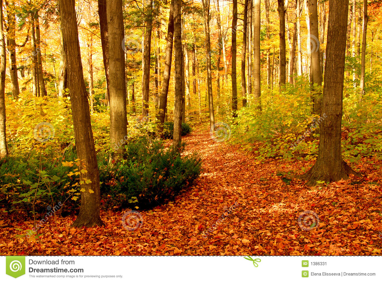 Fall Leaves Desktop Wallpaper Fall Forest Landscape Stock Image Image Of Ground Autumn