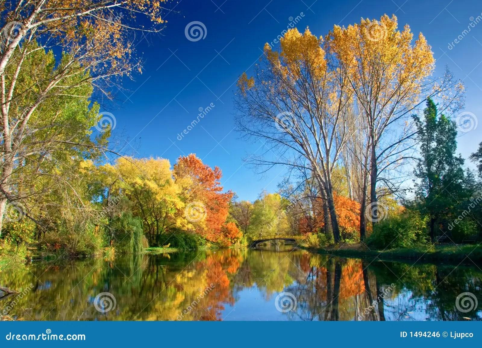 Birch Tree Fall Wallpaper Fall Landscape Royalty Free Stock Image Image 1494246