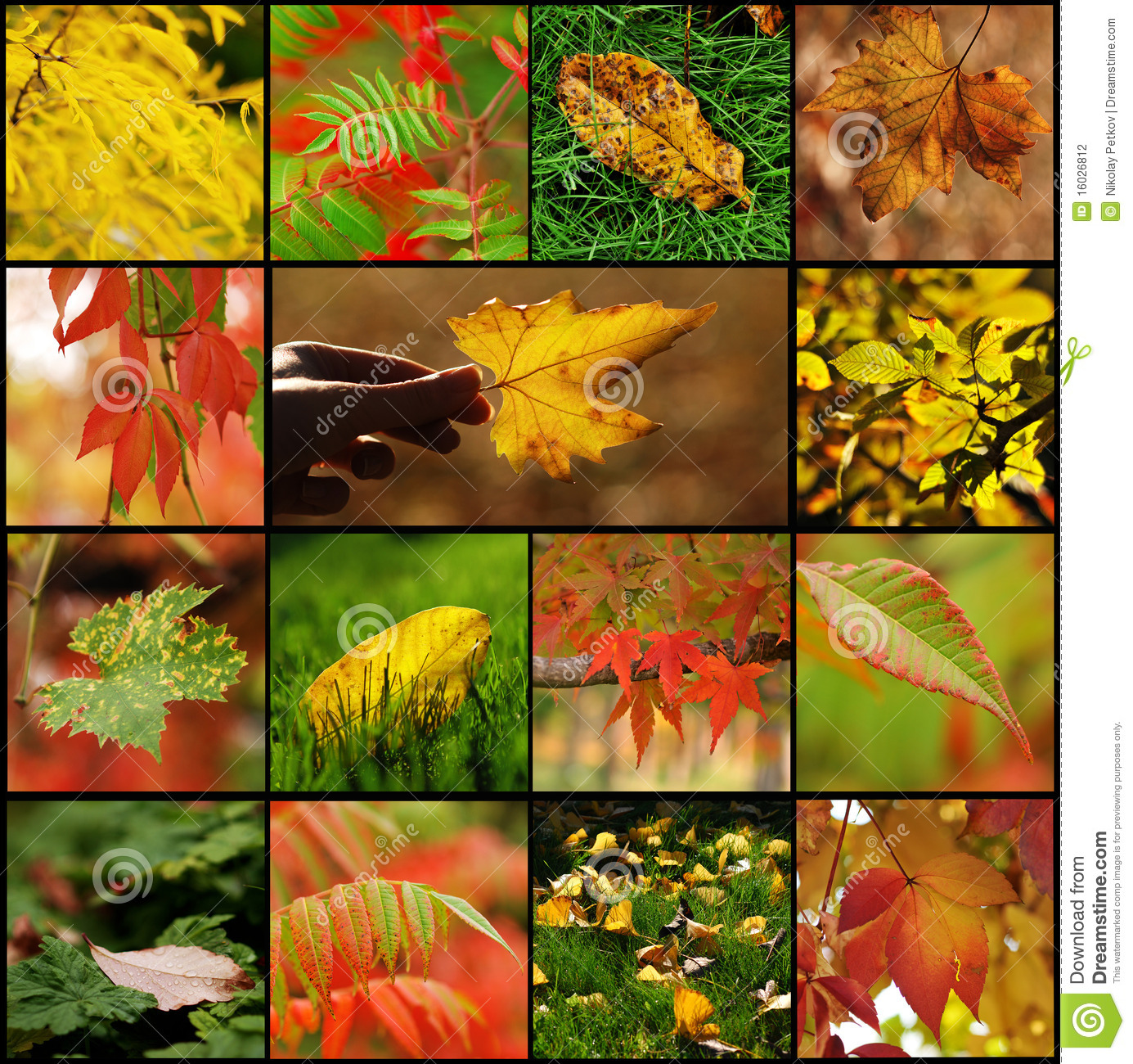 Free Fall Harvest Wallpaper Fall Leaf Collage Stock Photo Image Of Artistic Scene