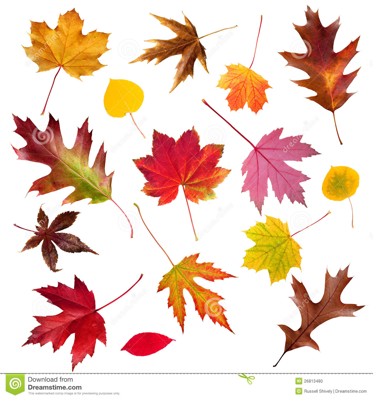 Autumn Tree Leaf Fall Animated Wallpaper Fall Leaf Collection Stock Photo Image 26813480
