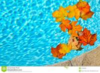 Fall Leaves Floating In Pool Stock Photo - Image: 27689858