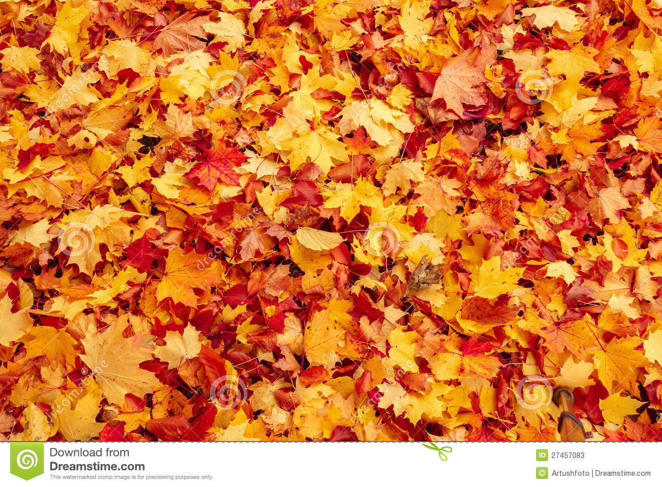 Fall Leaves Wallpaper Windows 7 Fall Orange And Red Autumn Leaves On Ground Stock Image
