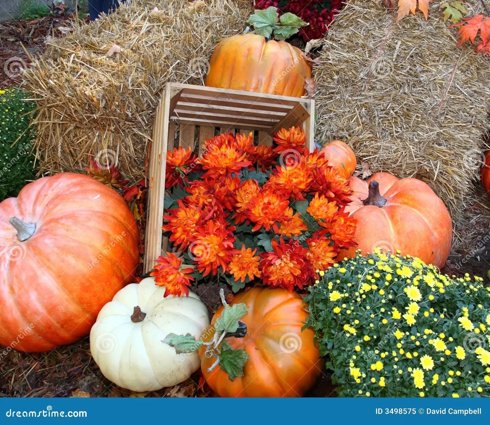 Fall Scenes Wallpaper With Pumpkins Fall Pumpkin Arrangement Royalty Free Stock Photo Image