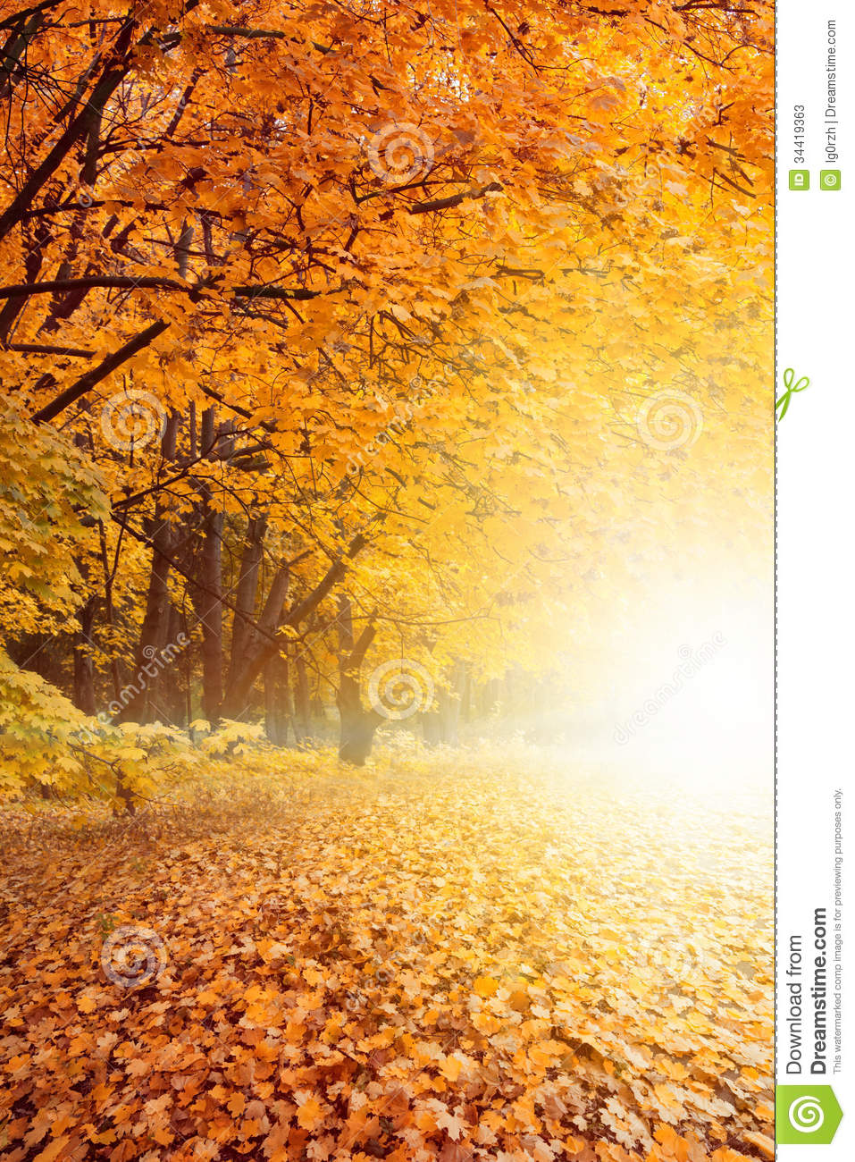 Maple Leaf Wallpaper For Fall Season Fall Sunset In Park Stock Photos Image 34419363