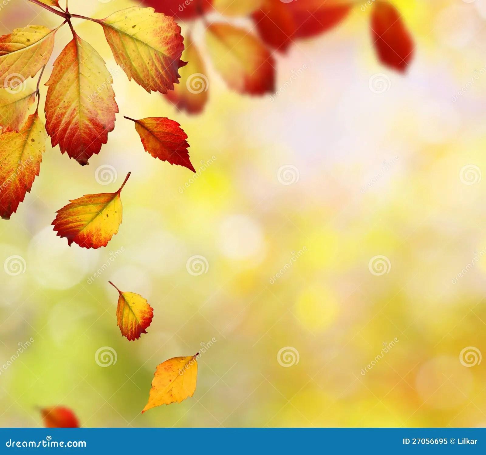 Maple Leaf Wallpaper For Fall Season Falling Autumn Leaves Stock Image Image Of Autumn Fall