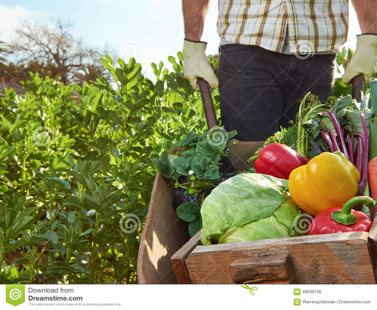 Sustainable Farmer Farmer On Local Sustainable Organic Farm Stock Photo Image Of