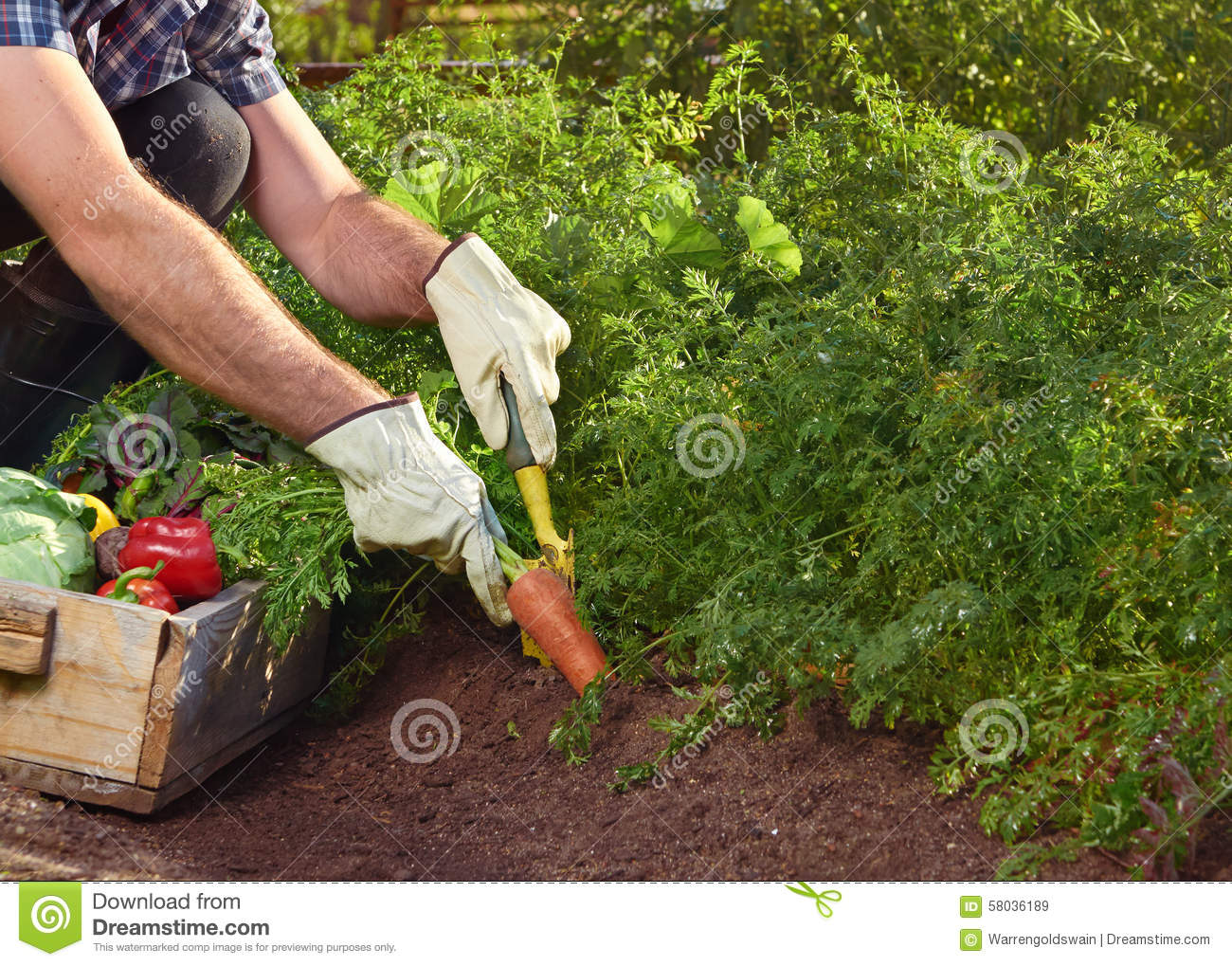 Sustainable Farmer Farmer On Local Sustainable Organic Farm Stock Image Image Of