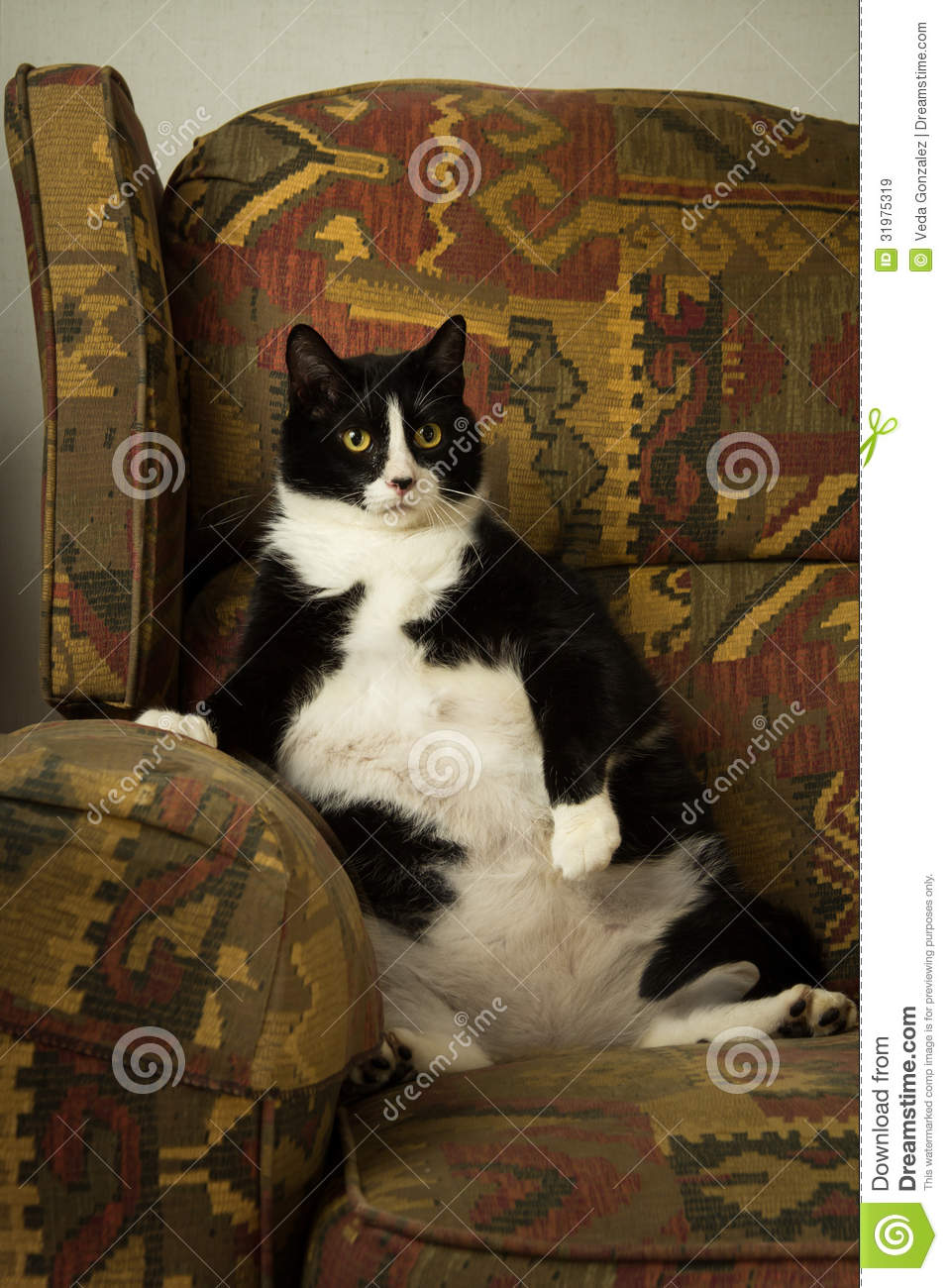 Furniture Recliner Chair Fat Cat On Recliner Royalty Free Stock Images - Image