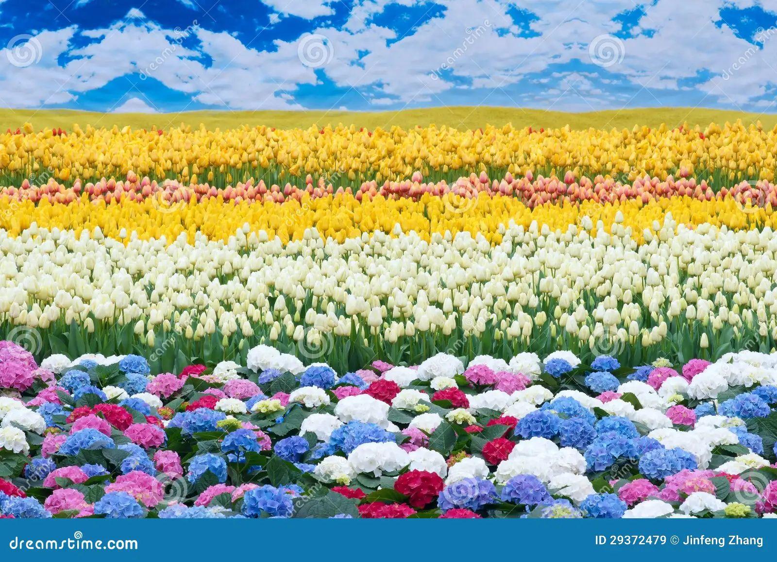Flower scenery flower