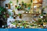 Flower shop stock photo. Image of sale, plants, interior ...