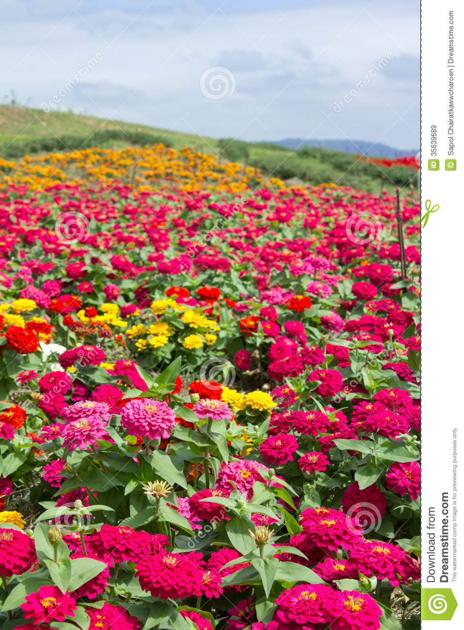 Garden Dreams Flowers Field Are Blooming Royalty Free Stock Images