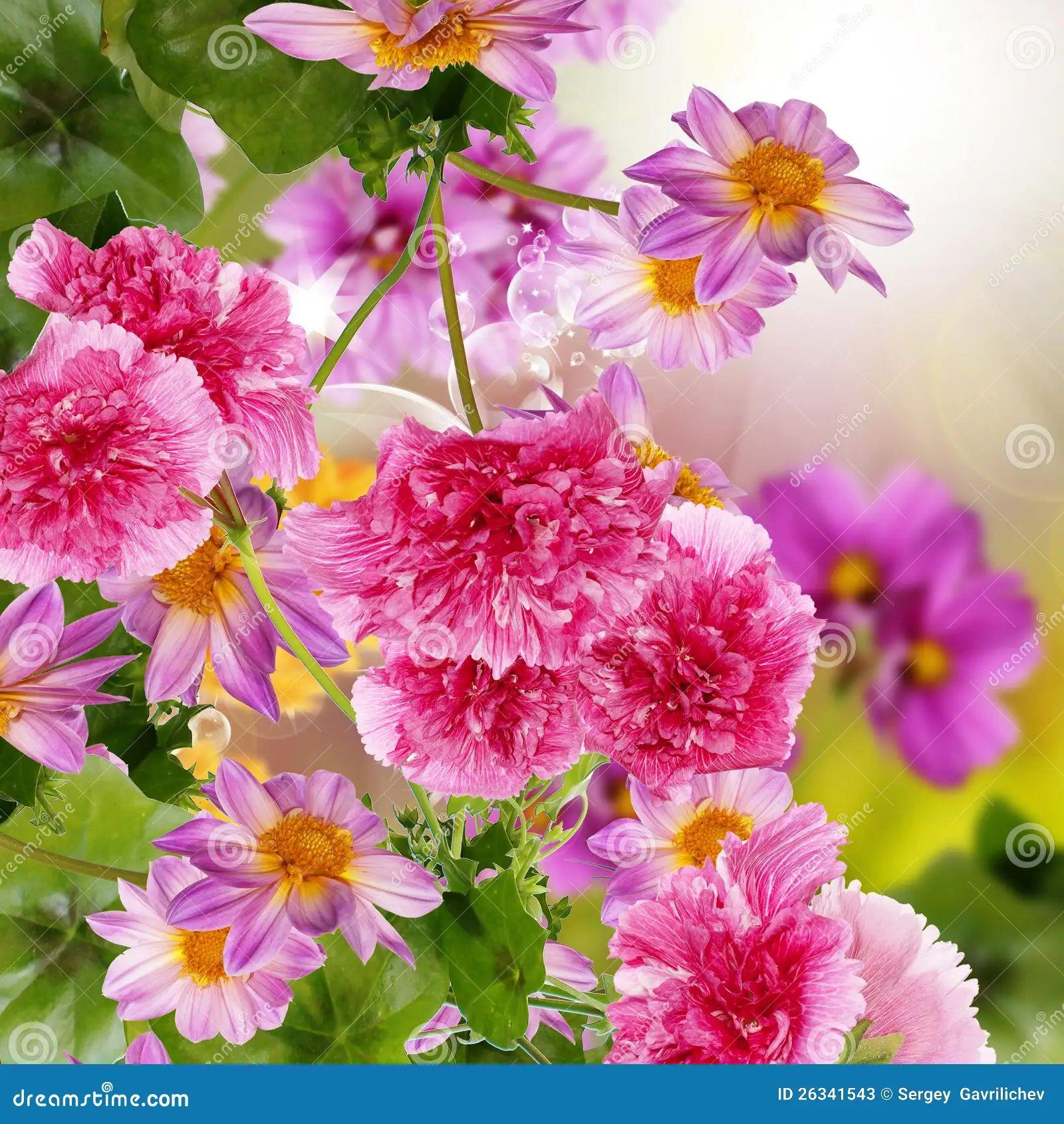 Flowers garden stock photos image 26341543