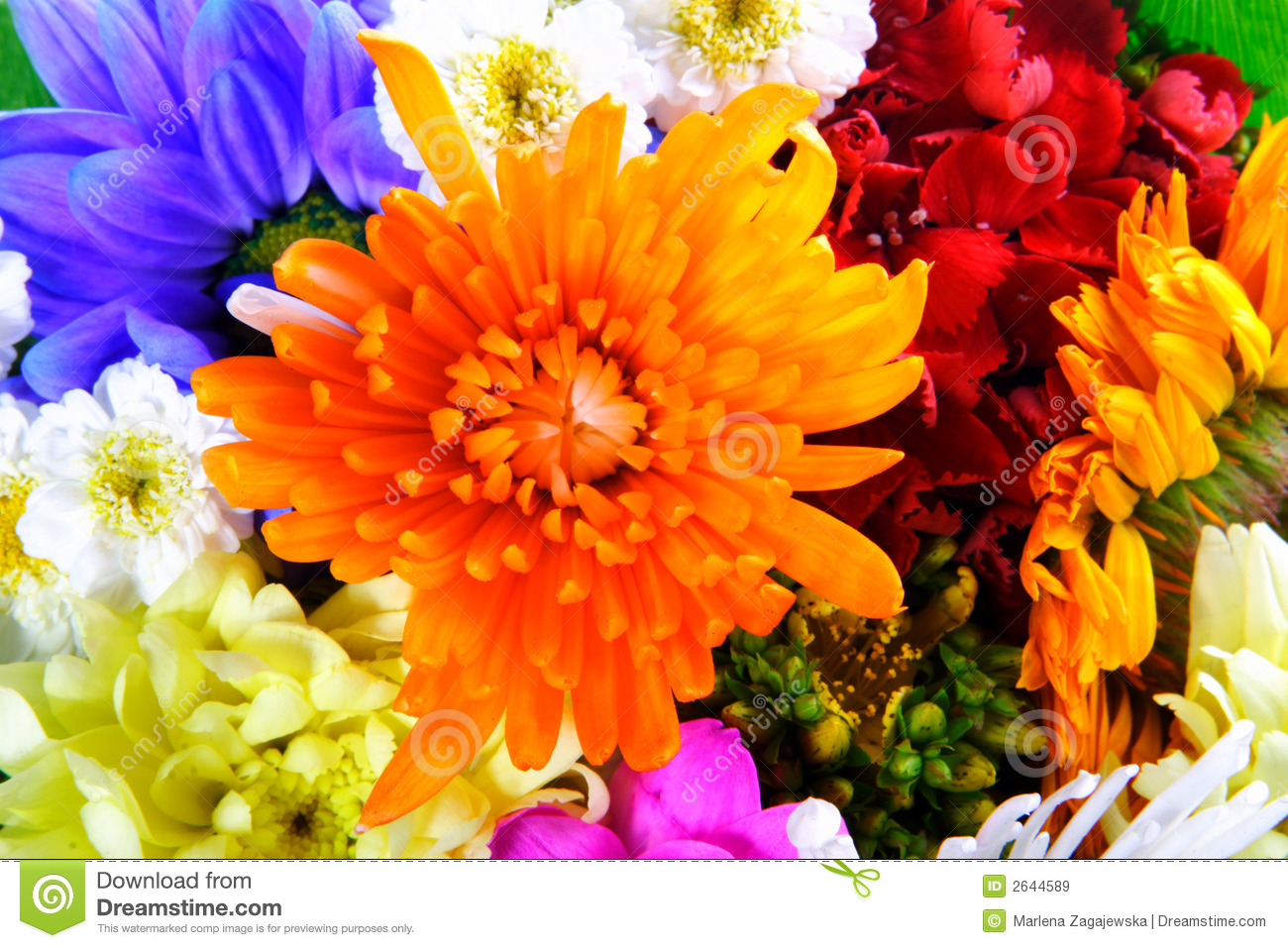 Fall Colored Background Wallpaper Flowers Mix Royalty Free Stock Images Image 2644589