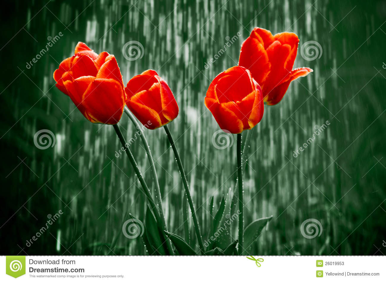 3d Water Drop Wallpaper Flowers In Rain Stock Photos Image 26019953