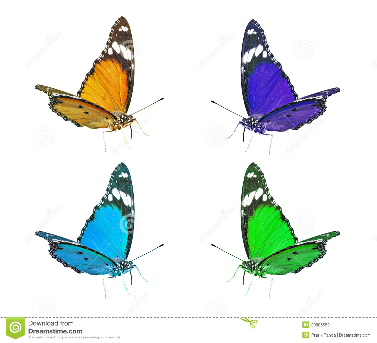 Flying Butterfly Animated Colorful Flying Butterflies Clip Art Royalty Free Stock