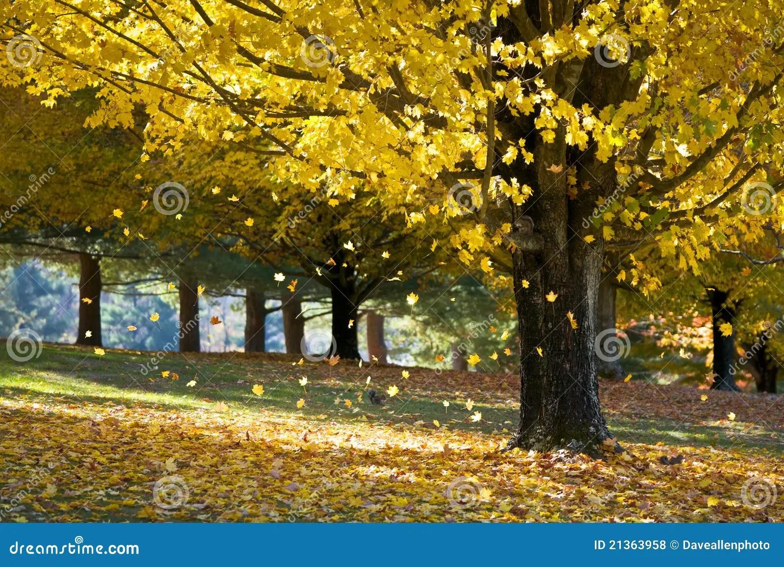 3d Falling Leaves Animated Wallpaper Free Download Folhas De Pl 225 Tano Do Amarelo Da Folha De Queda Da 225 Rvore