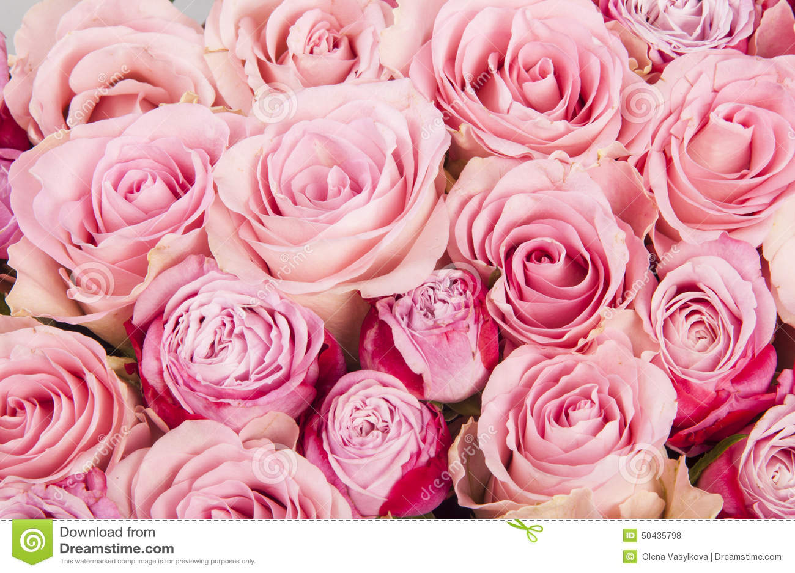 Cute Roses Wallpapers Download Fond Avec De Belles Roses Roses Photo Stock Image Du
