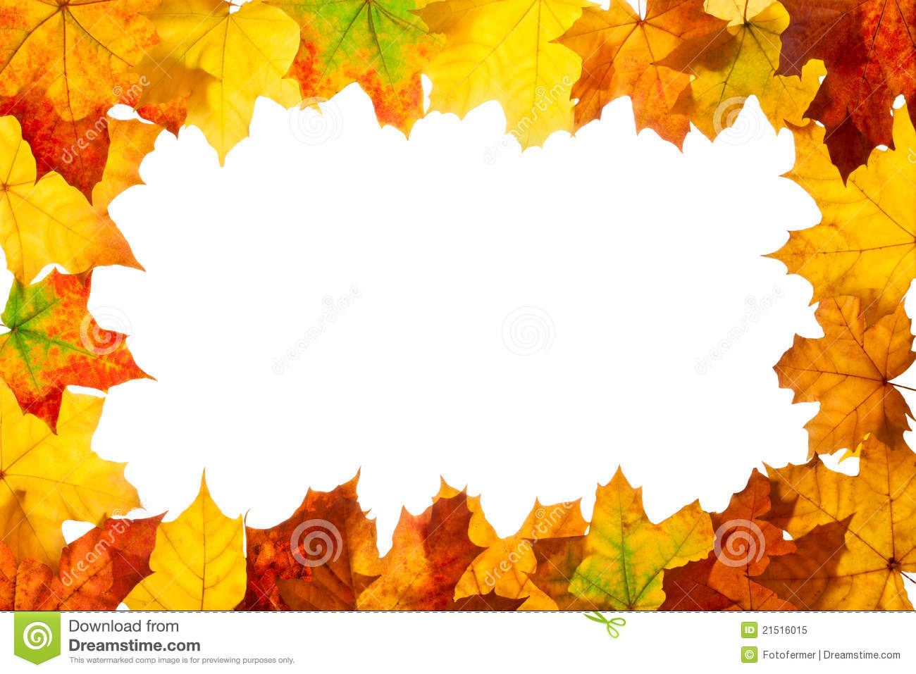 Wallpaper Leaves Falling Frame Of Maple Autumn Leaves Stock Image Image 21516015