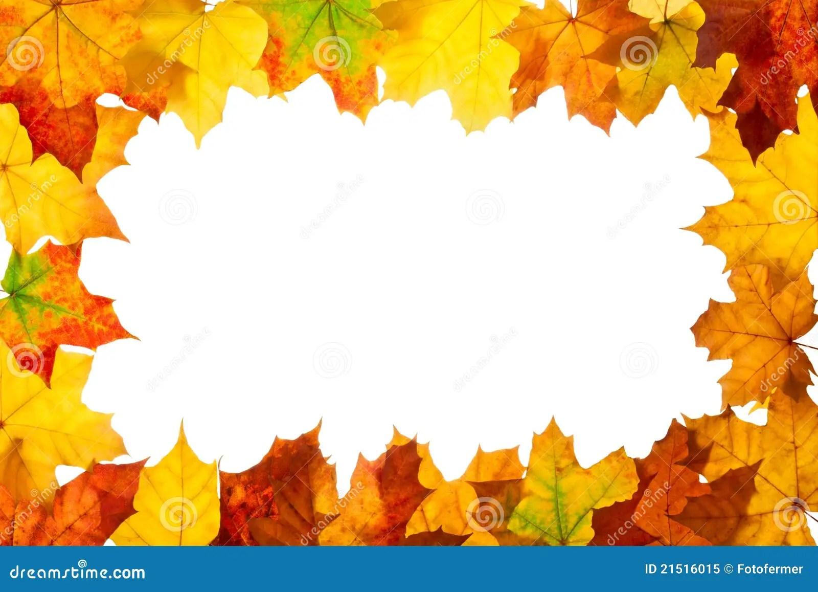Falling Maple Leaves Wallpaper Frame Of Maple Autumn Leaves Stock Image Image 21516015