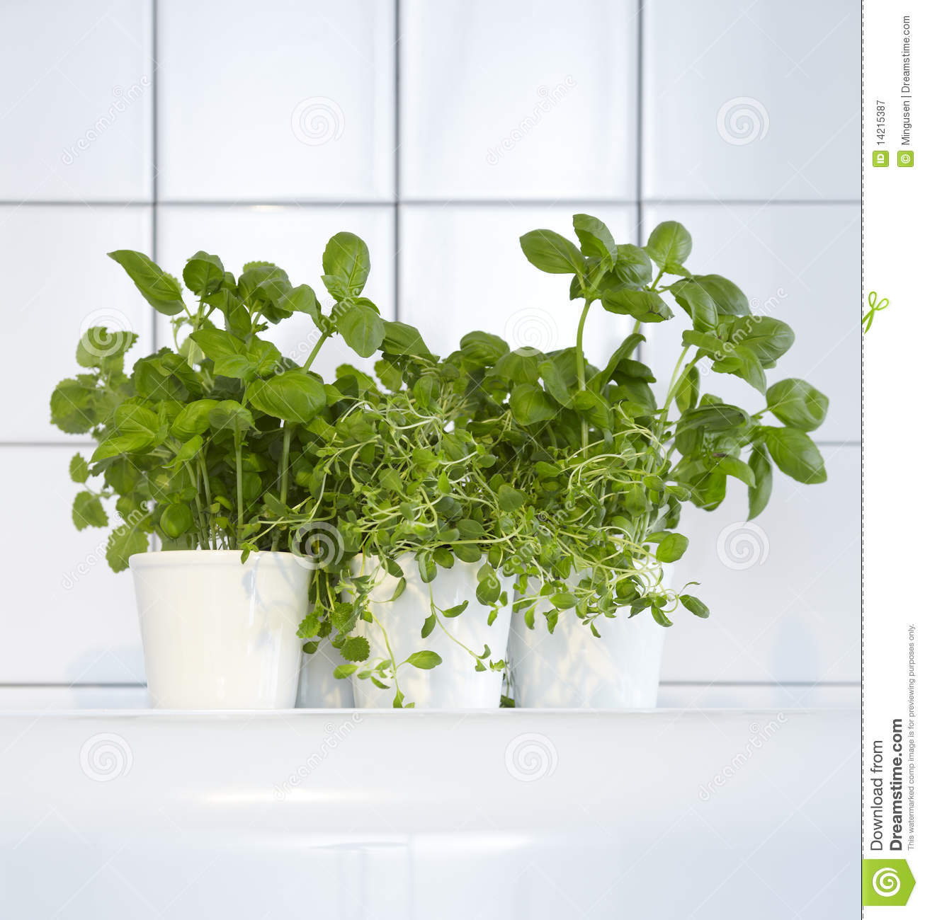 Herb Pots Kitchen Fresh Herbs In Kitchen Stock Image Image Of Basil