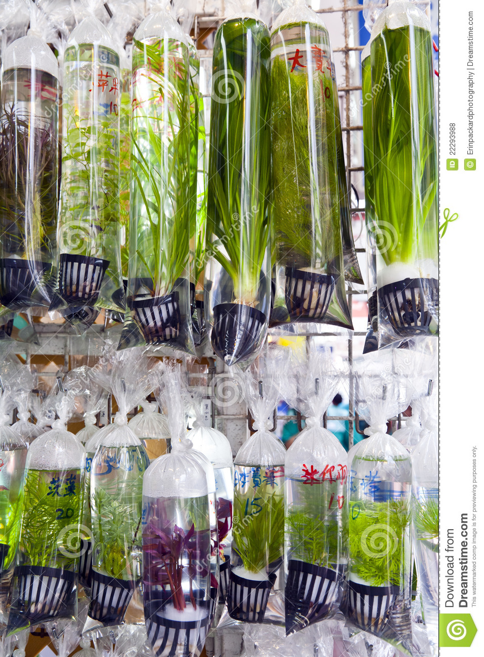 Asian Plants For Sale Freshwater Plants For Sale Stock Photo Image Of Asia 22293988